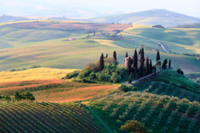 Tuscany- Vineyards
